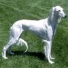 lurcher pups - last post by caspa