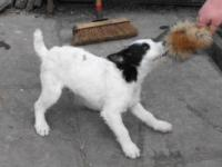 dogsbollocks58