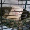 Ferret Re-homing thread - F... - last post by vwguy1998