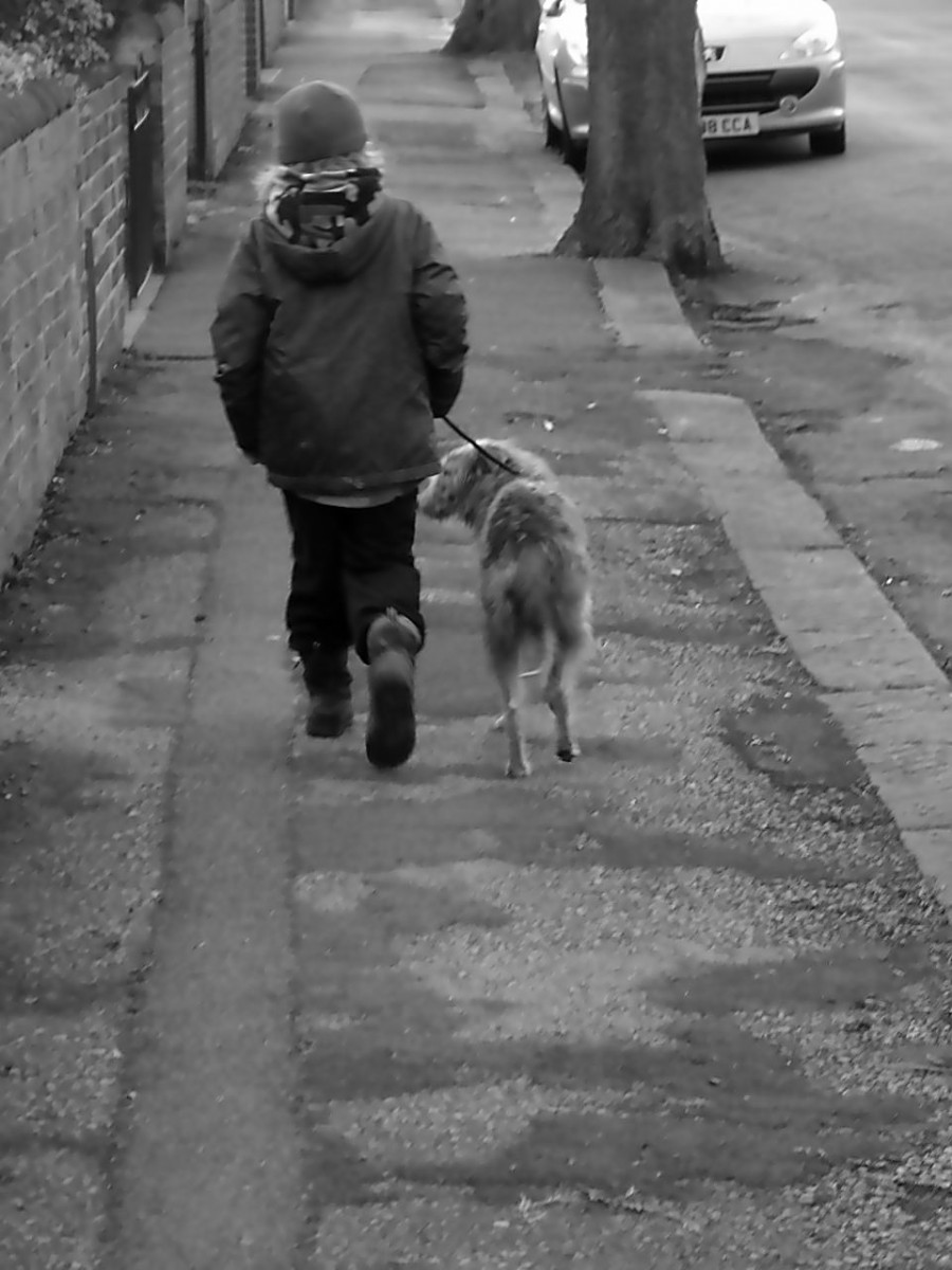 One Lad And His Dog