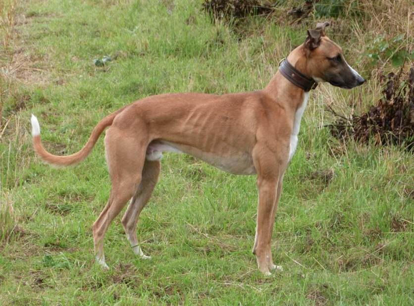pip1968 dog