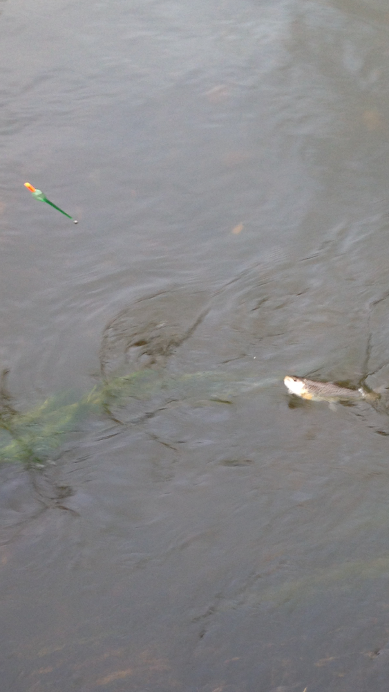 IMG_0086trout3.PNG