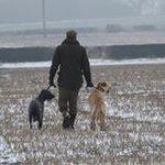 crossy terrier lad