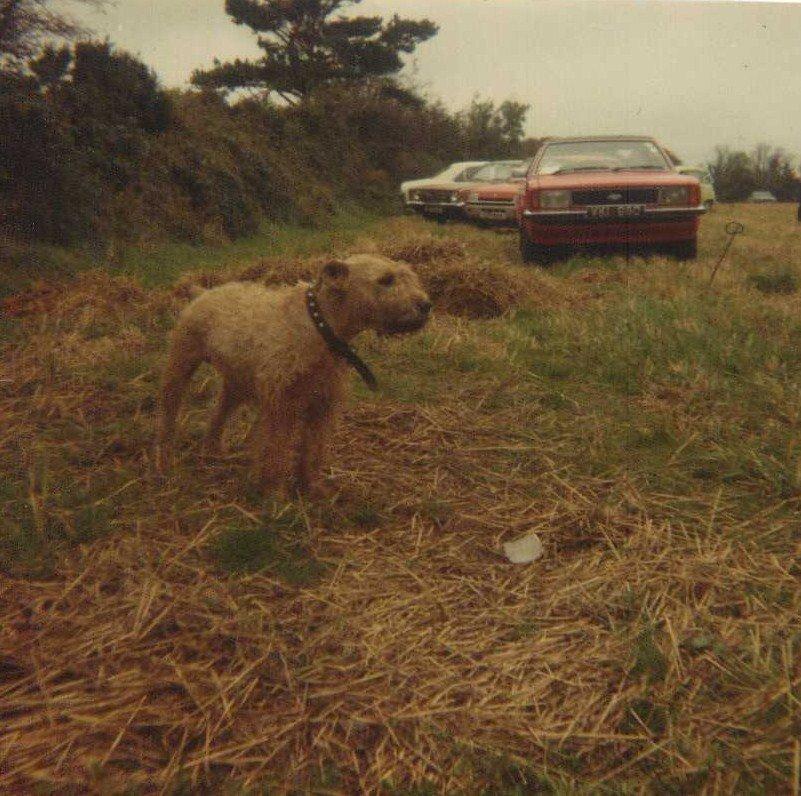 diddycoy finn (bruce) 1982.jpg