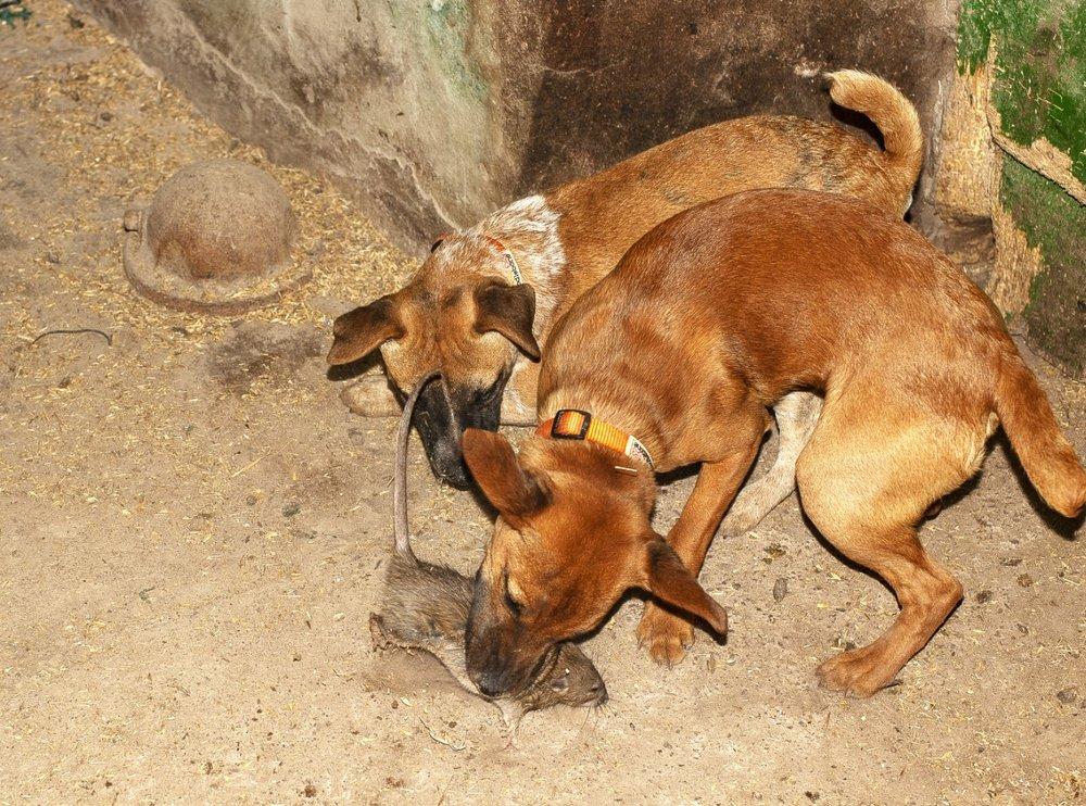 Pups.jpg.b23f3d929da46389910fea738644667f.jpg