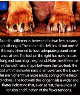 feet.png.cd0aa1f02f835c183f1e1c6ad8f42fbc.png