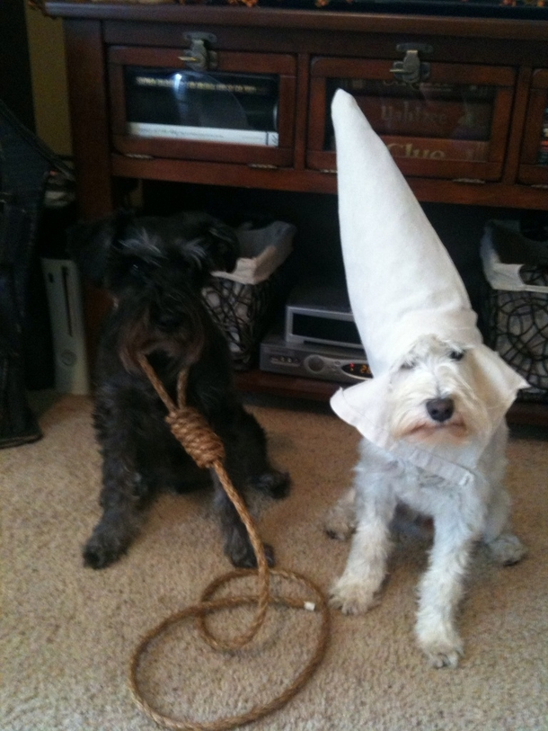 halloween-costumes-for-my-dogs-im-black-feel-free-to-laugh-cause-its-a-fuckin-joke-58027.png