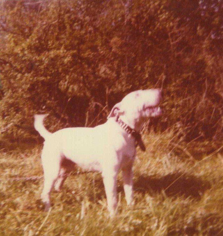 dundalk trials 1980......jpg
