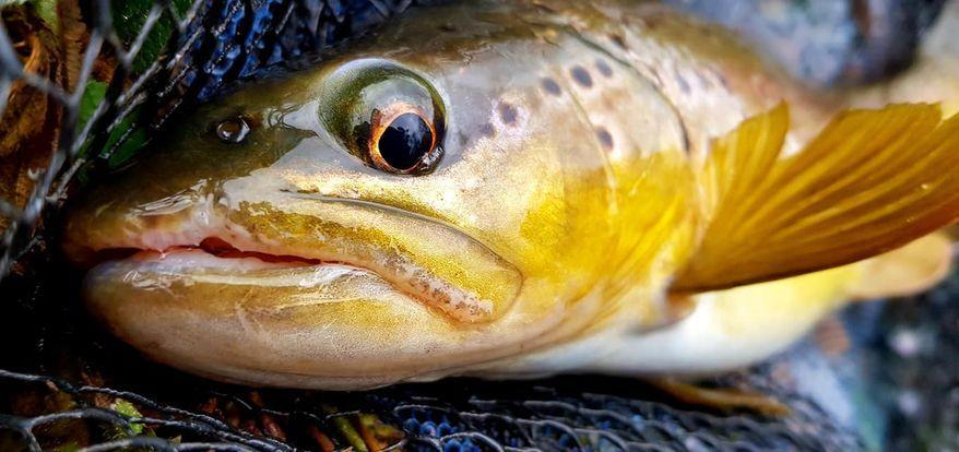 trout6.jpg