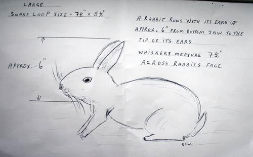 Rabbit Snaring Part 1