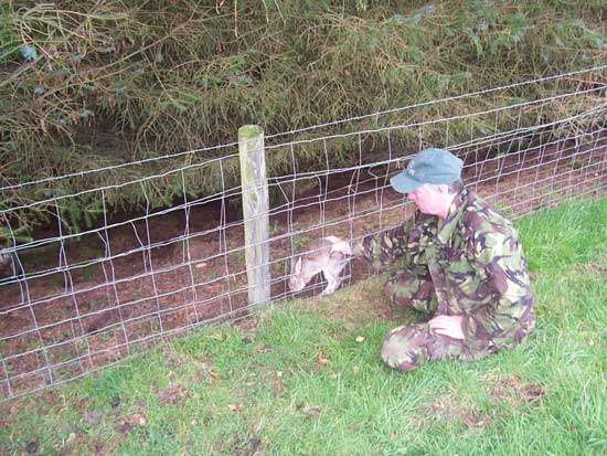 Rabbit Snaring -The Hunting Life