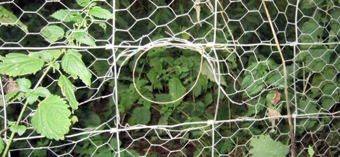 Rabbit Fence Snare