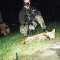 Fox Down