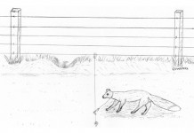 Fox snaring slider snare.