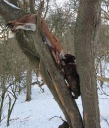 Gypsy Climbing Tree