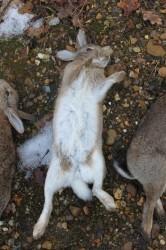 Bunnies On Bank