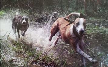 The Lurcher, in Field, Fen Forest and Scrub