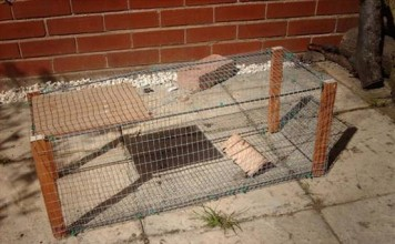 How to Build a Rabbit Cage Trap