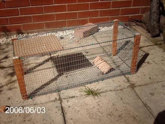 How to build a rabbit trap - How to make a rabbit cage ...